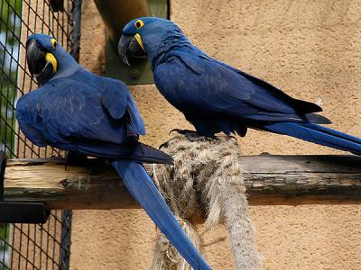Parrots+and+macaws+pictures
